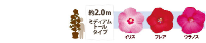 タイタンビカス 背丈比較