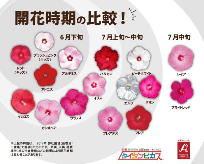 qr0120タイタンビカス開花時期の比較